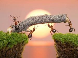 Working-ants-ss_652974792