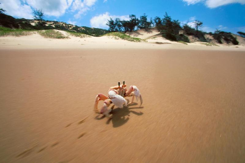 yengec kumsal deniz kurak hayvanlar resim