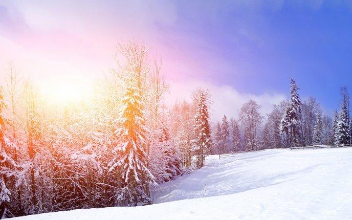 8641 Hot winter sun beautiful white season