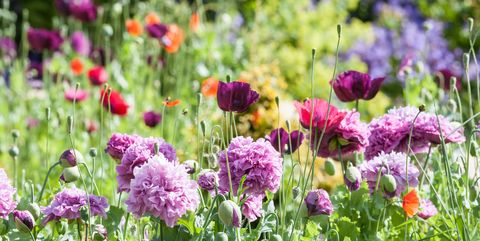 types of flowers 1520214627